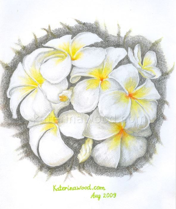 Summer flower, . Pencil drawing by Katerina Wood