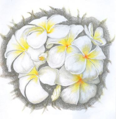 Summer flower, printed copy with inscription <b>&pound;19</b>, downloadable scanned copy of various resolutions <b>&pound;5</b>&#150;<b>&pound;15</b>, drawn copy <b>&pound;60</b>. Pencil drawing by Katerina Wood