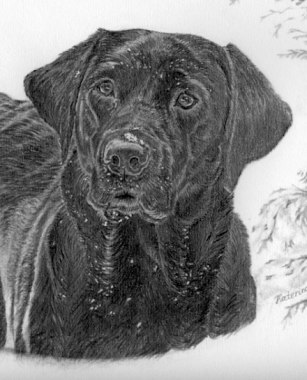 Helena in Snow, with the mount and frame. Pencil drawing by Katerina Wood